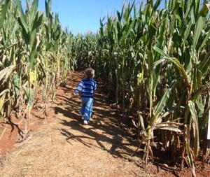 Find local corn mazes and hay rides here!